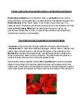 History and Facts of Poinsettia Plants, Euphorbia pulcherrima
