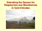 Extending the Season for Raspberrie...