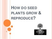 How do seed plants grow & reproduce