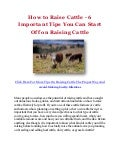 How to Raise Cattle - 6 Important Tips You Can Start Off on Raising Cattle