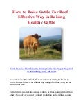 How to Raise Cattle For Beef - Effective Way in Raising Healthy Cattle