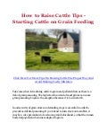 How to Raise Cattle Tips - Starting Cattle on Grain Feeding