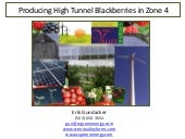 High Tunnel Blackberries