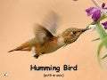 Hummingbirds (with music)