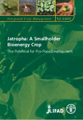 Jatropha Vegetable Oil: BioEnergy F...