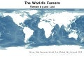 WRI (high res.map)- Global Forest Cover Map
