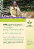 Ethiopia: Sheep-fattening transforms lives. ILRI