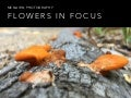 Improve your flower photography
