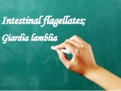 Intestinal flagellates