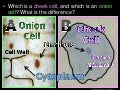 Introduction to Cells, Cheek Cell and Onion Cell Lab, Lesson PowerPoint