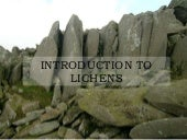 Introduction To Lichens -  Lasw