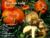 Intro to fungi_presentation - fall ...