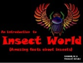 Introduction to insect world