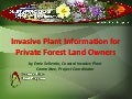 Invasive plant information for forest owners
