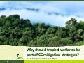 Why should tropical wetlands be part of climate change mitigation strategies?