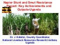 Napier Stunt and Smut Resistance Project: key achievements and outputs in Uganda