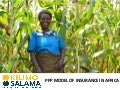 Kilimo Salama: PPP model of insurance in Africa