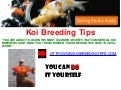 Koi Breeding Tips