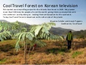 CoolTravel Forest