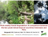 Peat swamp forest degradation: A comparison between Indonesia and Peru