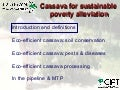 Cassava for sustainable poverty alleviation