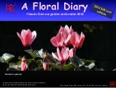 Floral Diary 2014