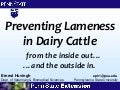 Can I Really Prevent My Cows from Becoming Lame?