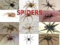 EDLC 2nd. year. Animal Kingdom: Spiders- Leonel
