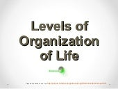 Levels of organization of life -