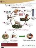 Keep goats and sheep free of coenurosis