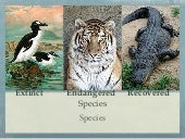 Malaika ess  species presentation