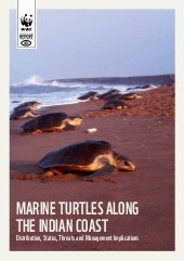 Marine Turtles Along the Indian Coa...