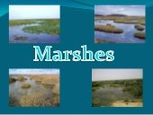 Miss Campolongo's Period 5 :Marsh
