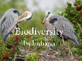 Biodiversity in Indiana - Sustainable Natural Resources Task Force 11/10/11
