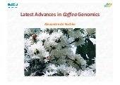Latest Advances in Coffea Genomics