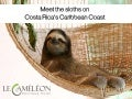 Meet the sloths on Costa Rica's Caribbean coast