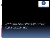Metabolismo integrado de carbohidratos