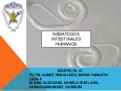 Micro y p._(eq-4)_nematodos_intesti...