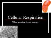 Module 6, lesson 2 cell respiration