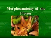 Morphoanatomy Of  The  Flower