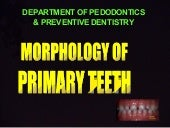 Morphology of primary teeth  pedodo...