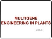 Multigene engineering in plants
