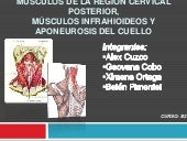 Musculos de la region cervical post...