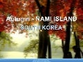AUTUMN- Nami Island  - South Korea