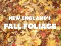 New England's Fall Foliage