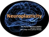 Introduction to Neuroplasticity & i...