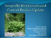 Nisqually Knotweed Program Update -...