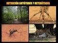 Nutricion autótrofa y heterótrofa