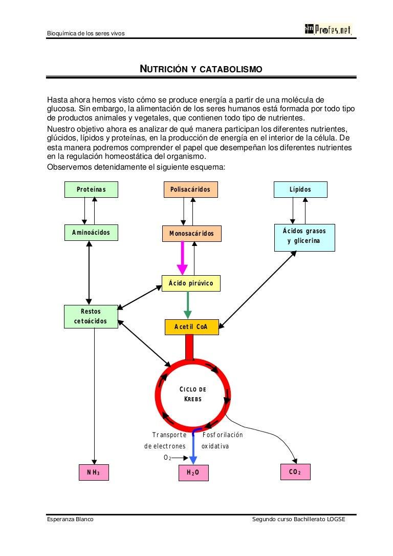Resultado de imagen para introduccion a la glucolisis