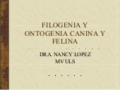 Ontogenia Y Filogenia